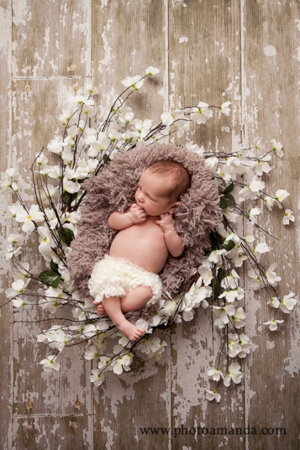 Newborn baby curled up in a bed of flowers